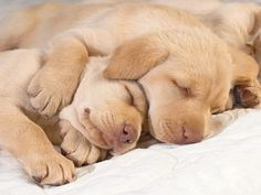 Only the Cutest Sleeping Puppy Photos on the Whole Internet