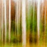 NO Photoshop - all done as a shot. Long exposure and movement. 50mm lens, Canon 5Dii Treelines - by Drew Echberg Photographer