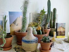 Urban Jungle Bloggers: Plant Still Life - Desert by @dufttrunken