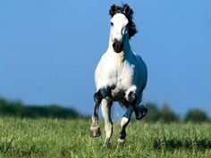 Horse Mane Colors | ... - redish, blueish, brownish, blackish color with black mane and tail