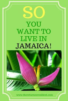 So you want to live in Jamaica! The ultimate guide to helping you move and live in Jamaica as a Returnee Resident, an expat, a digital nomad or a long-term winter vacationer. Come find out what you need to know! Living In Jamaica, Job Page, Moving Overseas, Jamaica Travel, Moving Tips, The Hard Way, Travel Abroad, Where To Go, Feel Better