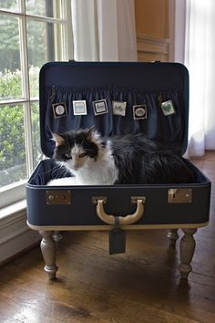 Suitcase Cat Bed  I found an antique suitcase at a thrift store and turned into a functional cat bed for my prissy little kitties rather than buying a previously assembled cat bed!