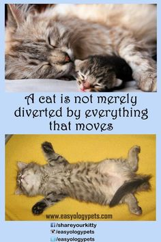 A #cat is not merely diverted by everything that moves! #CatSprayingBakingSoda