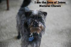 An all natural little dog