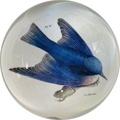 """John Derian Dome Paperweights """"Pudgy Bird"""".  Who needs it?  But I like it"""