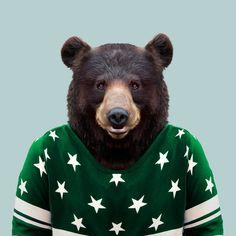 American black bear via @zoo_portraits