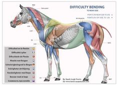 Acupuncture points for horses that have trouble bending - you can use the Photonic light and apply it to the points.  http://pwc2.com/savvyquebec  For a complete chart, check out  http://www.facebook.com/pages/Equine-Acupuncture-Courses/133314320019033?ref=ts=ts