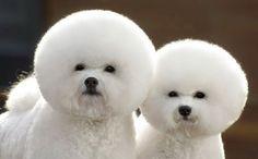分身?シンクロ?フュージョン?コラにしか見えない双子みたいにそっくりな動物たちの写真 : カラパイア