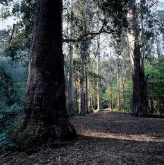 Souto da Retorta (Viveiro, Lugo) #Galicia