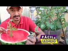 Como Plantar Melancia em Vaso ( DA SEMENTE A FRUTA) - YouTube Watermelon, Garden, Nature, Youtube, Planting Seeds, Planting Flowers, Small Vegetable Gardens, Gardening, Vases