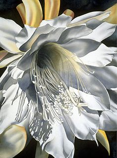 Birgit O'Connor - Unbelieable realism!!! This is a night blooming cereus and looks just like a real cactus!!! This lady is beyond blessed!!!