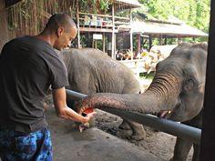 Hotspot Chiang Mai: Elephant Nature Park