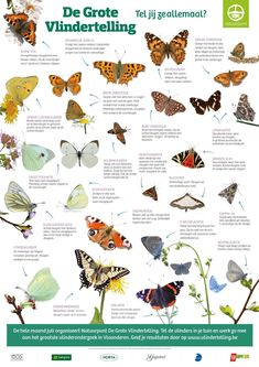 Science For Kids, Garden Inspiration, Animal Kingdom, Pet Birds, Vintage Posters, Butterfly, Animals, Glamping, Bugs
