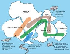 Learn about continental drift and the super continent Pangaea and print out a Pangaea flip book activity for kids.