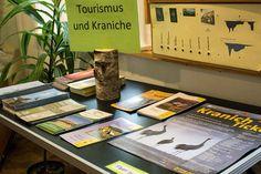 Ausstellung Faszination Kraniche in der Naturschutzstation Schwerin | Tourismus und Kraniche (c) FRank Koebsch