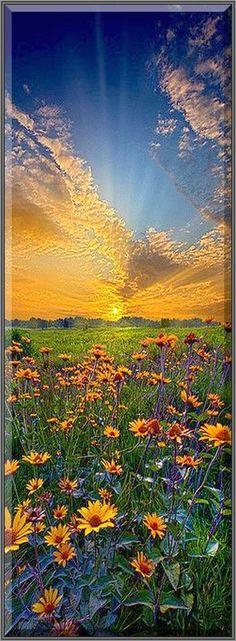 Daisy Dream ---   Wisconsin Horizons #by Phil Koch  #USA