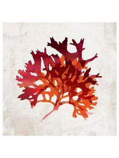 Pomegranate Coral III Canvas Giclee
