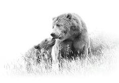 Baby Bear Tattoo, Cubs Tattoo, Bear Tattoos, Tattoo Art, Tatoos, Fine Art Posters, Mother Bears, Man Cave Art, Bear Pictures