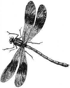 The Graphics Fairy entry for 09 Jul 2013--Vintage Dragonfly Image