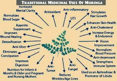 The Moringa Oleifera tree is so rich in nutrients from roots to leaf, all parts of the tree have amazing health boosting properties! The young, immature Moringa leaves are the most valued and widely used of all the tree parts. These young leafs are extremely Nutritious, containing ALL the Essential Amino Acids in amazing quantities, forming a complete protein source; and it also includes a robust list of vitamins, minerals, co-enzymes, and antioxidants that are necessary to a FIT BODY. Moringa Benefits, Health Benefits, Natural Cures, Natural Health, Different Types Of Cancer, Healing Herbs, Health Facts, How To Increase Energy, Health Remedies