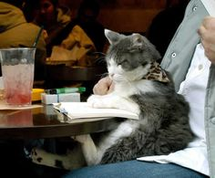 """The """"Can't Eat Alone in Public Without a Book"""" Reader 