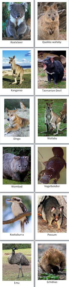 my continent box - Australia: Australian animal cards