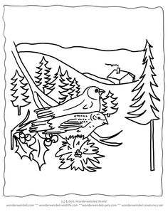 Free Printable Christmas Coloring Pages Birds Echos At Wonderweirded Wildlife NO To Print