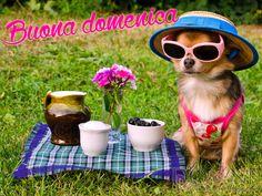buona domenica buon giorno immagine con scritta cane con occhiali pic nic.jpg