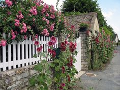 Fence on top of stone wall. Roses and hollyhocks on Rue Claude Monet by Rita Coanri