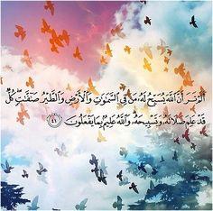 Birds (Quran 24:41; Surat an-Nur) |   أَلَمْ تَرَ أَنَّ اللَّهَ يُسَبِّحُ لَهُ مَنْ فِي السَّمَاوَاتِ وَالْأَرْضِ وَالطَّيْرُ صَافَّاتٍ كُلٌّ قَدْ عَلِمَ صَلَاتَهُ وَتَسْبِيحَهُ وَاللَّهُ عَلِيمٌ بِمَا يَفْعَلُونَ   (Do you not see that Allah is exalted by whomever is within the heavens and the earth and [by] the birds with wings spread [in flight]? Each [of them] has known his [means of] prayer and exalting [Him], and Allah is Knowing of what they do)
