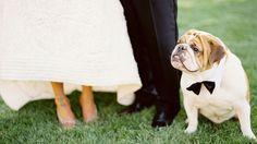 Reportaje de boda con tu perro con pajarita