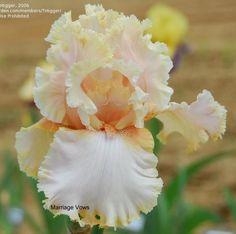 Iris tb Marriage Vows