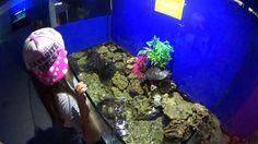 Шоу Гигантских Рыб. Смотрим с сестрёнками   big fish video for children  