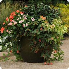Impressive mix of begonia and impatiens  container for shade