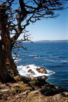 Point Lobos State Reserve near Carmel, California | by rfin
