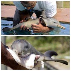 Bebe delfin