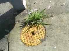 Who lives in a pineapple under the street?