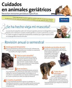 Cuidados en animales geriátricos.
