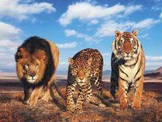 Una estupenda lista con los animales mas bellos del planeta, aunque sé que la belleza es relativa, estos animales si se ganan un lugar especial en esta lista, habrá muchos que me falten, espero me...