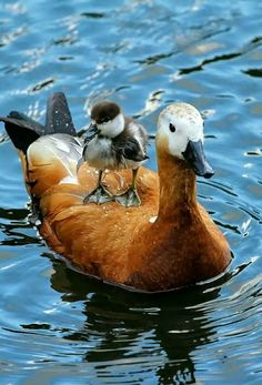 - My list of the most beautiful animals Pretty Birds, Cute Birds, Beautiful Birds, Animals Beautiful, Cute Baby Animals, Animals And Pets, Funny Animals, Photo Animaliere, Tier Fotos