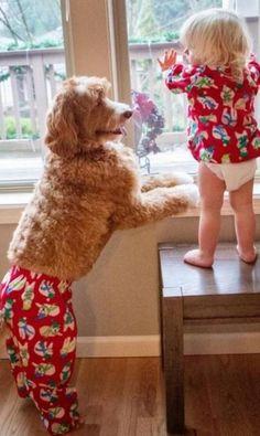 cachorro-roupas-bebe-3