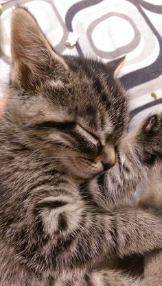 5 signs your cats loves you.