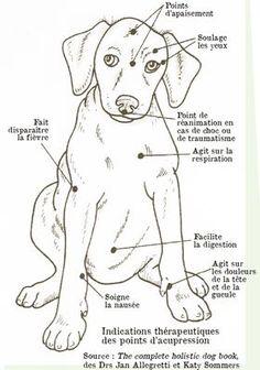 Practice acupressure for your dog - suinoel - - Pratiquer l'acupression pour son chien To practice acupressure for his dog – Osteopathy and acupressure for dogs – Wamiz Merle Australian Shepherd, Animals And Pets, Cute Animals, Amor Animal, Baby Dogs, Dog Care, Dog Mom, I Love Dogs, Dog Training