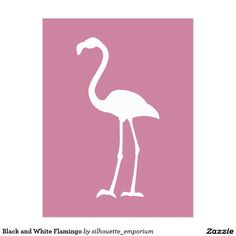 Dusty Rose Pink and White Flamingo Postcard