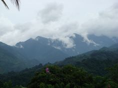 Blue Mountain, Swift River Portland, Jamaica WI
