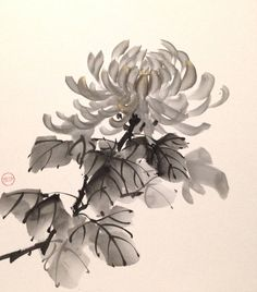 Sumie chrysanthemum by bsshka on DeviantArt Sumi E Painting, Japan Painting, Japanese Drawings, Japanese Art, Chrysanthemum Drawing, Chinese Painting Flowers, Etiquette Vintage, Chinese Art, Chinese Brush