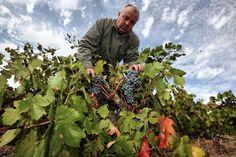 CCOO calcula que unas 29.000 personas trabajarán en la vendimia de Castilla-La Mancha http://www.vinetur.com/2013081213095/ccoo-calcula-que-unas-29000-personas-trabajaran-en-la-vendimia-de-castilla-la-mancha.html