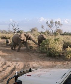 Kenya's national parks are the newest addition to Google Street View, as well as the first Kenyan scenery for the project.
