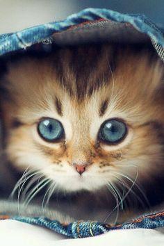 Oh those beautiful blue eyes ♥