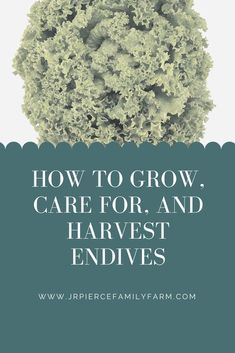 The endive is a delicious plant to include in any salad. Here's how to grow it in your garden this spring! Organic Farming, Organic Gardening, Gardening Tips, Vegetable Gardening, Growing Plants, Growing Vegetables, Raised Garden Beds, Raised Bed, Bountiful Harvest